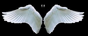wing, angel, swan